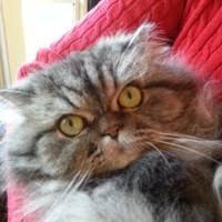 "5 ""Lorraine Asher"" profiles | LinkedIn"
