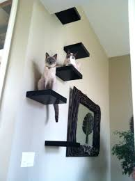 Floating Shelves For Cats Best Cat Shelf Ideas Shopforchange