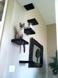 Floating Shelves For Cats Best Cat Shelf Ideas Shopforchange
