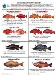 California Rockfish Chart Rockfish Sculpins Lingcods