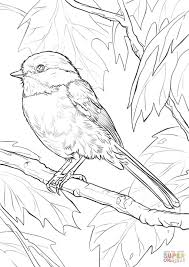 Download now or view online the free printable wild birds flashcards for kids on english language with real images. Black Capped Chickadee Coloring Page Free Printable Coloring Pages Bird Coloring Pages Coloring Pages Free Coloring Pages