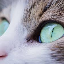 home remes for cat eye problems