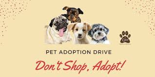 dog adoption centers in hyderabad breed dogs picture