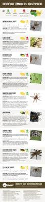 Spider Identification Chart California House Spider Identification Chart Visual Ly