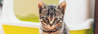 how to get rid of cat odors for good