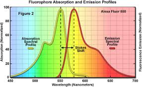 Oil Fluorescence Chart Zeiss Microscopy Online Campus Microscopy Basics