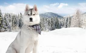 Winter Cute Dog Wallpapers - Wallpaper Cave