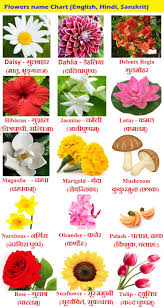 Flower Chart In English Flowers Name In Hindi Phoolon Ke Naam Sanskrit And