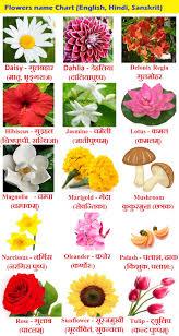 Flowers Name In Hindi Phoolon Ke Naam Sanskrit And