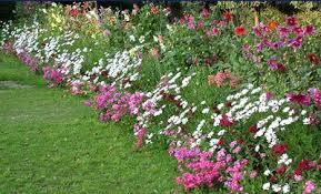 Small Picture Download Garden Border Plants Flowers Solidaria Garden
