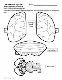 7de676387ee7c3c422e6803cb7258f5d 301 best images about science on pinterest respiratory system on nervous system printable