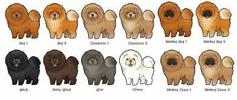 Chow Color Chart Chow Chow Dog Price Chow Chow Dogs Chow