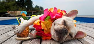 Taking Your Pets with You on Vacation-Here's What You Should Do - Informinc