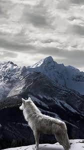 wolf iphone 5 wallpaper. Brilliant Wolf In Wolf Iphone 5 Wallpaper S