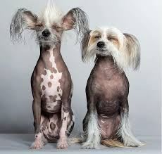 top 30 dogs that don t shed