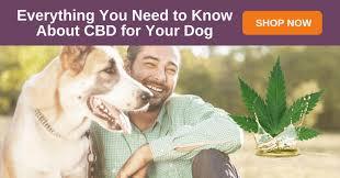 Vetoryl Dosing Chart Cbd Dosing For Dogs Choosing Calculating The Right Dose