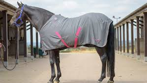 thermomaster summer stable rug with badges close to being best in test 8 10