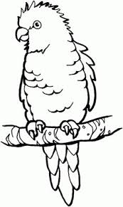 coloring pages for kids coloring pagescoloring book pagescoloring sheetscolouringfree printable coloring pagesparrot birdcoloring