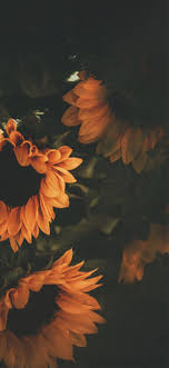 Flower Wallpaper Iphone Xs Max - Iphone ...