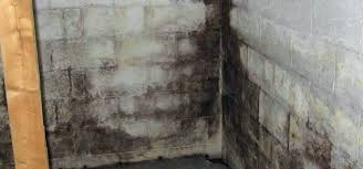 how to get rid of mold on concrete walls how to get rid of black mold