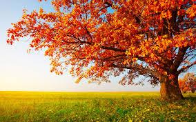 Bildresultat för autumn