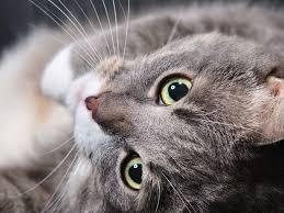 Wenn Die Katze Gestorben Ist Menschen Richtig Trösten