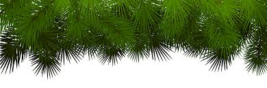 Pine Branches For Decoration Pine Branches Decoration Transparent Png Clip Art Gallery