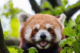 「動物のフリー画像」の画像検索結果