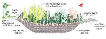 Small Picture Build a Rain Garden 12000 Rain Gardens