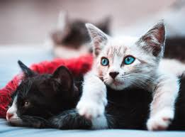 Fascinating Facts Cat Fur Colors And Patterns Life Cats