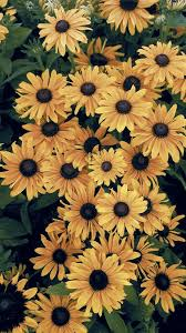 Sunflower Aesthetic Wallpapers - Top ...