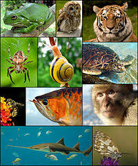 Learnhive Icse Grade 1 Science Animals Lessons Exercises And