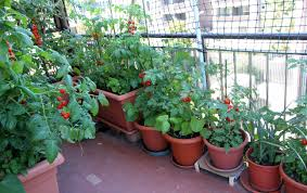 Apartment Gardening Guide  Information On Apartment Gardening For Beginners