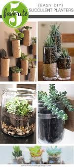 easy diy succulent planters