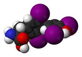 「甲状腺ホルモンと生理作用」の画像検索結果