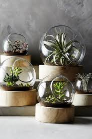 terrarium furniture. full size of uncategorized25 best air plants ideas on pinterest plant display terrarium furniture e