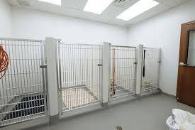 indoor dog kennels