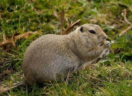 gophers are creatures which like to eat your favorite plants and flowers if you find them in your garden then you need to do something because they have