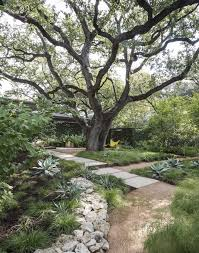 drought resistant garden. Modren Drought A Massive Live Oak In Austin Shades The Front Garden Of Landscape Architect  Christine Ten Eyck With Drought Resistant Garden R