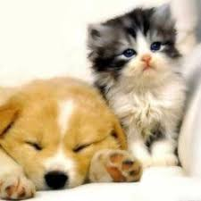 cute kittens and puppies together. Contemporary Cute Cute Puppies And Kittens 2 In And Together H