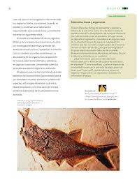 Libro de ciencias naturales 6 grado 2019 2020. Ciencias Naturales Sexto Grado 2016 2017 Online Pagina 60 De 176 Libros De Texto Online