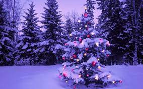 Outdoor christmas tree ...