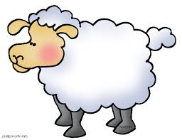 Image result for sheep pics