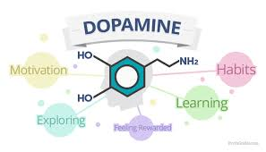 Image result for dopamine