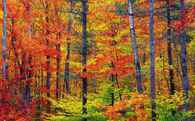 free nature wallpaper for fall. Vibrant Autumn Colors Wallpaper Nature Wallpapers Inside Free For Fall