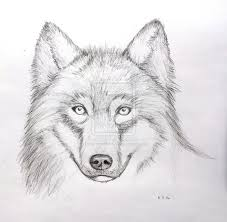 gray wolf face drawing.  Drawing Grey Wolf Face Drawing  Photo8 To Gray Wolf Face Drawing
