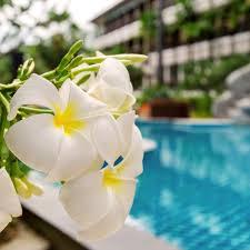 gr8 glass pool fencing perth frangipani free