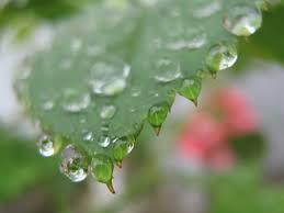 Bildresultat för regn på blad