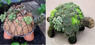 scrolling through i happened to see a pin featuring a topiary it was a super cute succulent turtle it was a dead end pin but i found who did
