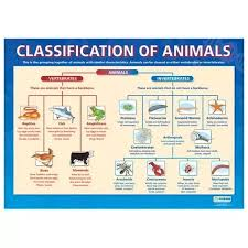 What Are The Animal Kingdoms Chart Is There Any More Race Beside Human And Animals Quora